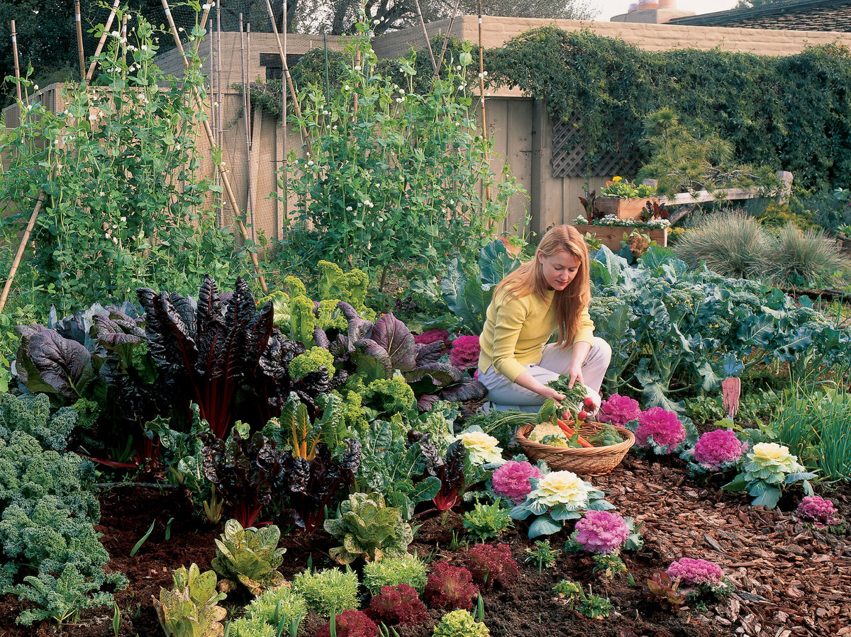 Free Plan: Your Cool-season Vegetable Garden