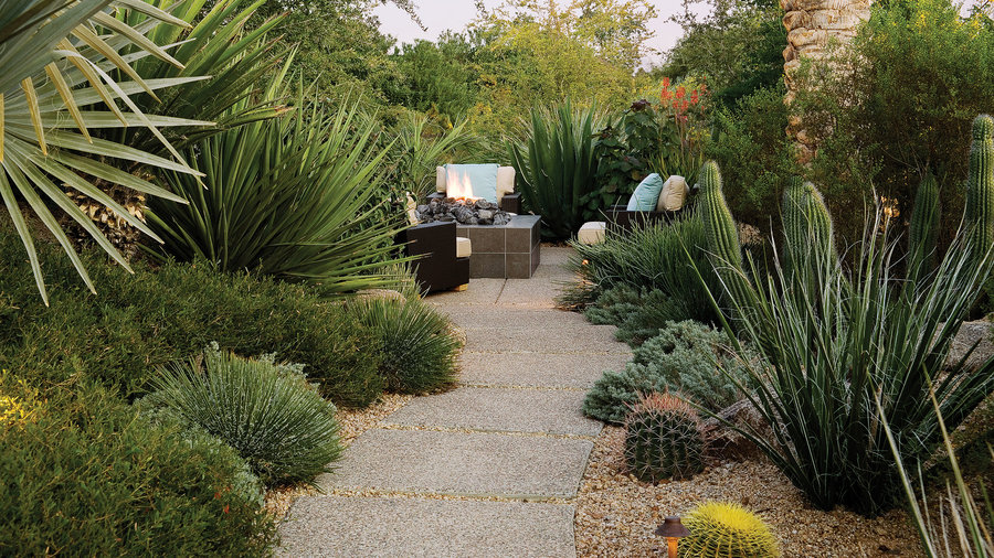 Wild Desert Backyard - Sunset Magazine - Sunset Magazine