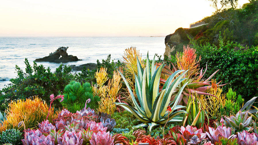How to create a sea creature succulent garden sunset for Country living magazine customer service