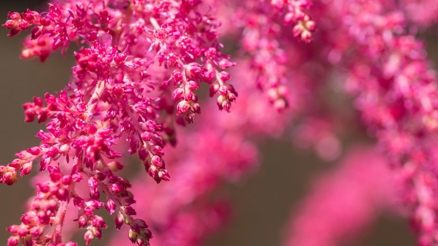 19 Colorful Plants For Shade Gardens Sunset Magazine