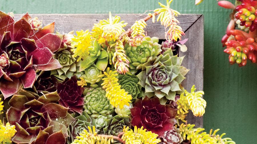 Flower Garden Designs For Full Sun