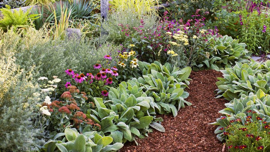 4 easy care flower beds sunset magazine sunset magazine for Easy upkeep landscaping